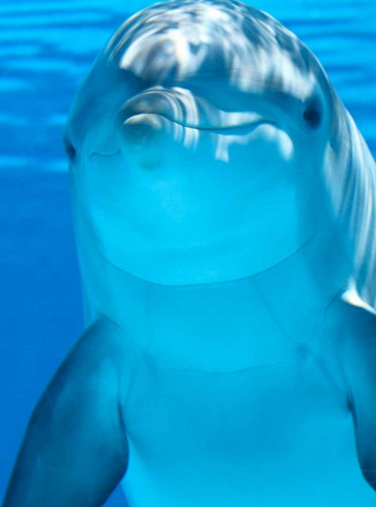 Alla ricerca dei Delfini in Sardegna