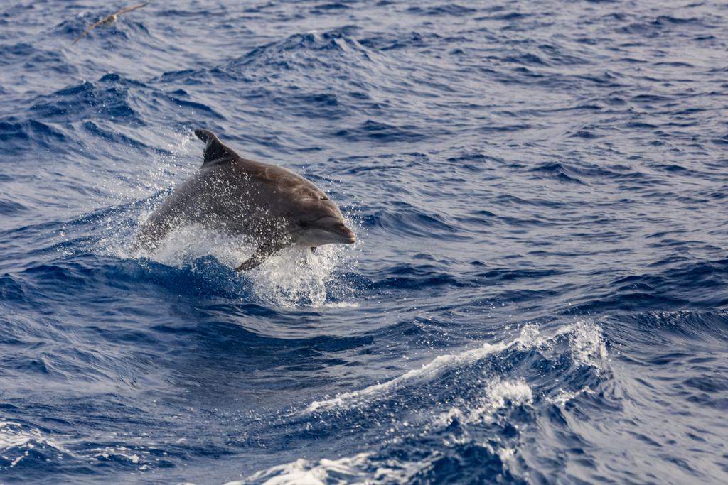 Alla scoperta dei delfini